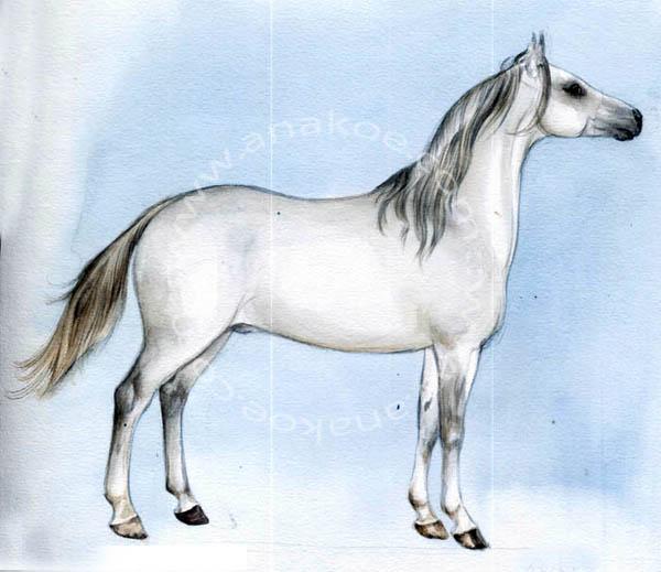 watercolor30